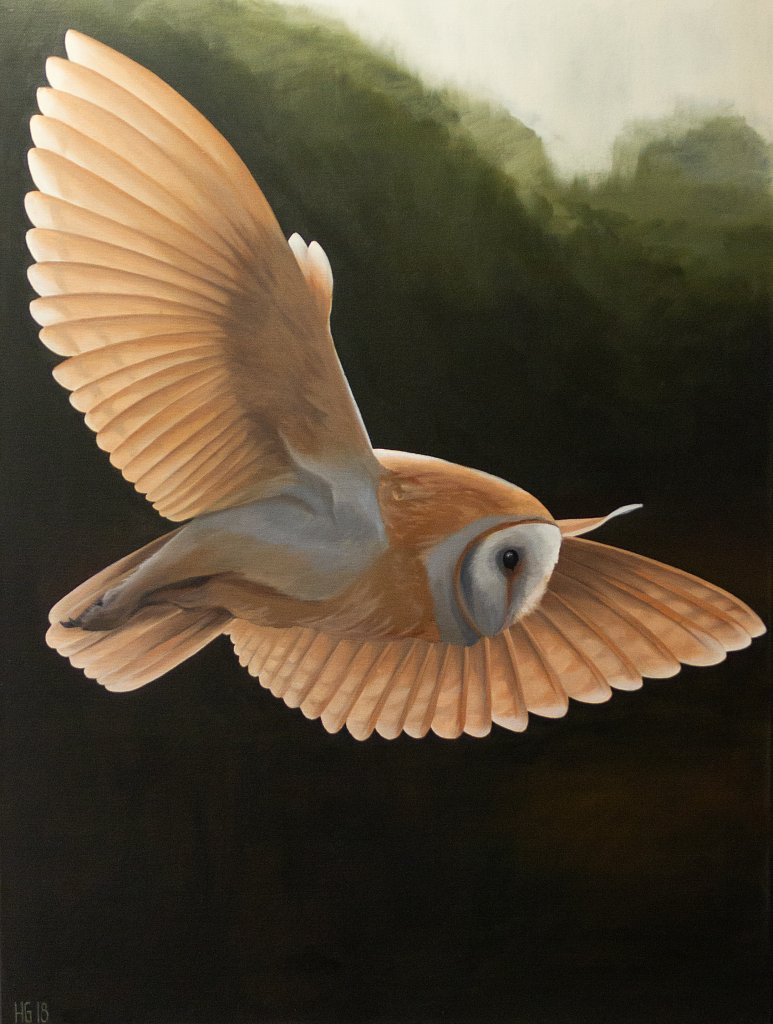 Flying Barnowl / Flygande tornuggla
